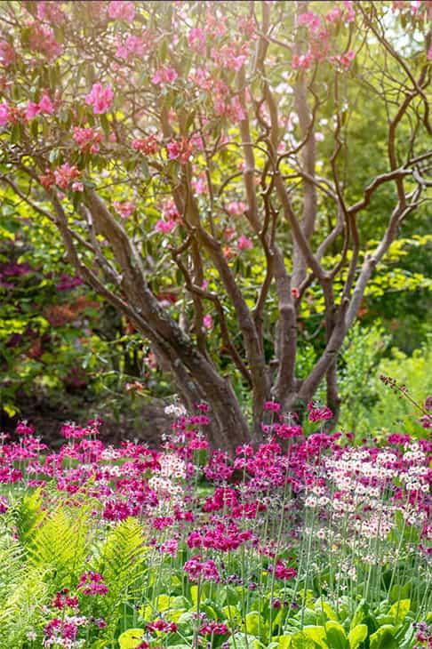 Jacky Parker Garden