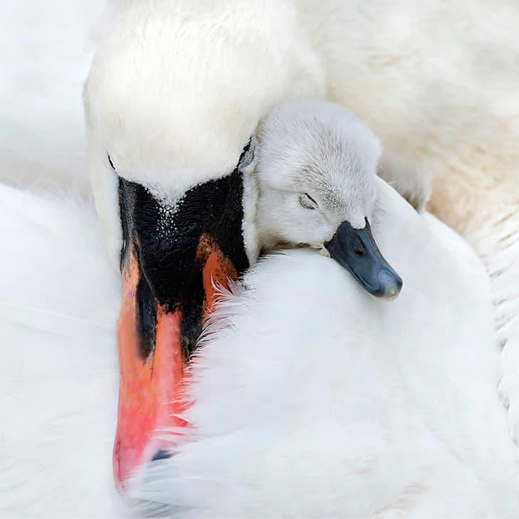 Jacky Parker Swan
